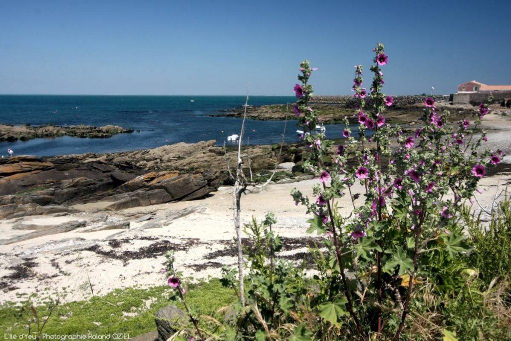 Photo de l'île d'Yeu à visiter lors d'un séjour au Côté Plage