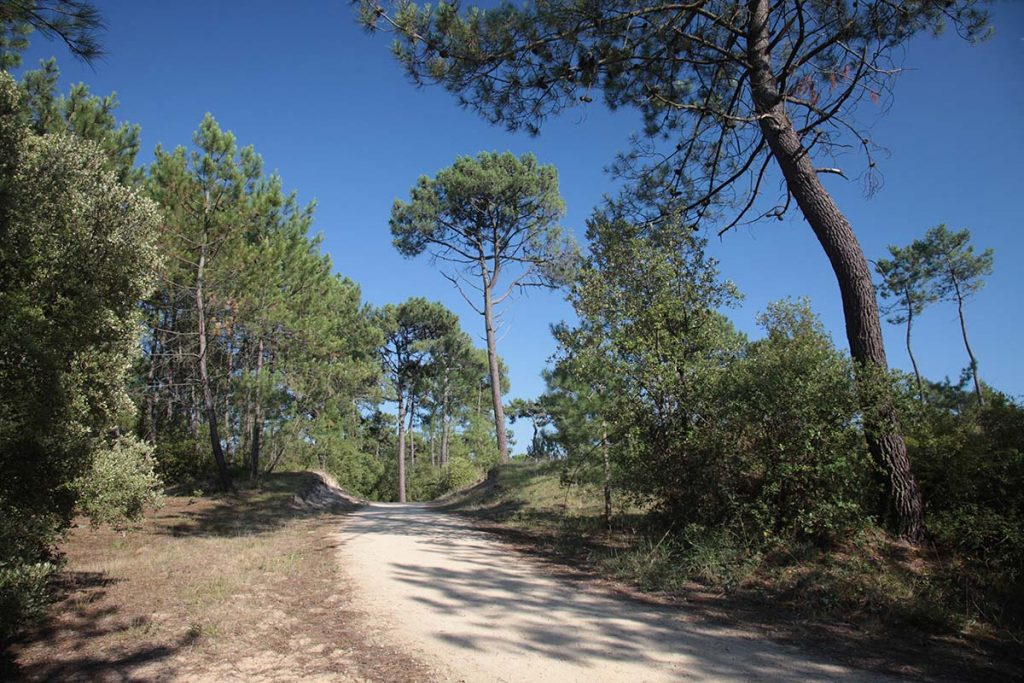 piste cyclable en foret domaniale de Saint Jean de Monts