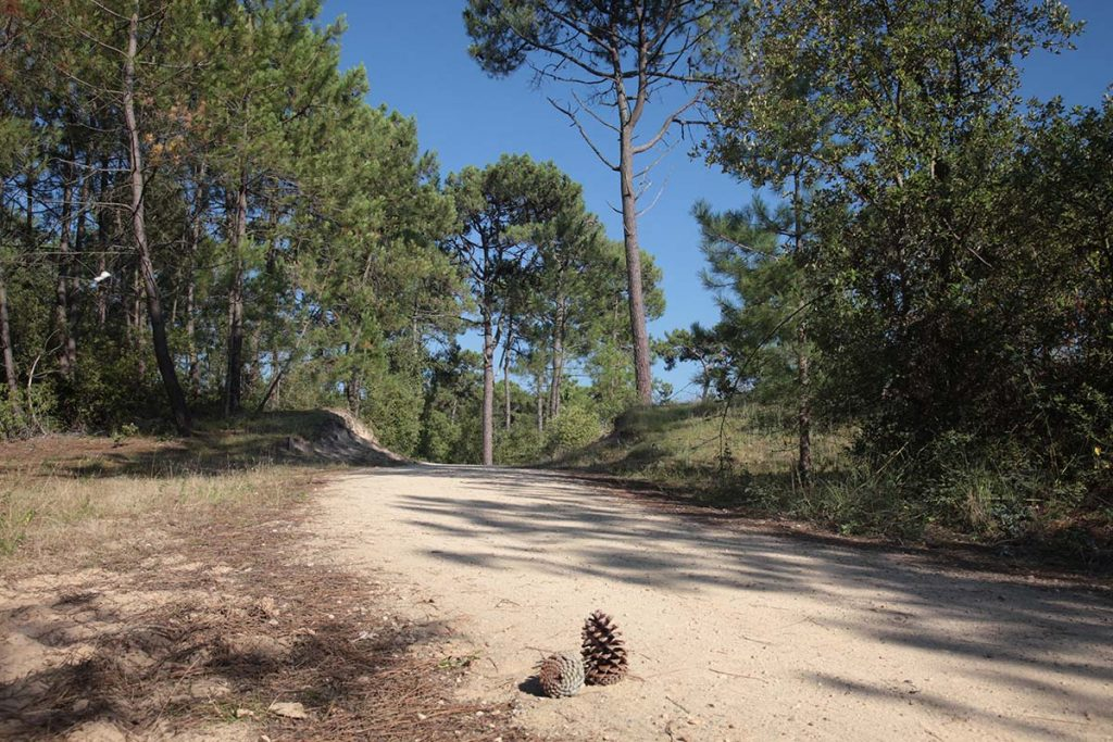 photo camping saint jean de monts vendee la foret de pins